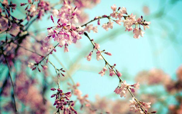 Весна в Харькове: самые интересные мероприятия в марте