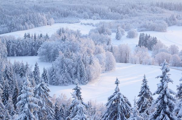 Зимние прогулки в Харькове
